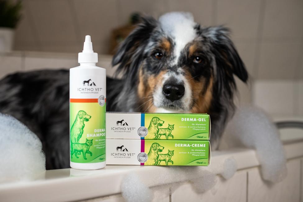 Hund in der Badewanne mit Pflegeprodukten